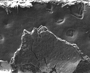 Рис. 2. Многослойная микропористая углеродная пленка на платиновой подложке с многочисленными включениями микрокристаллов платины (400 °С, снято на сканирующем электронном микроскопе в ДВГИ ДВО РАН)